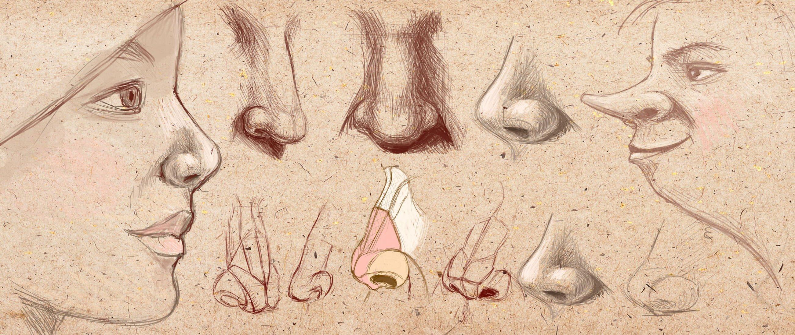как нарисовать нос человека карандашом поэтапно для начинающих
