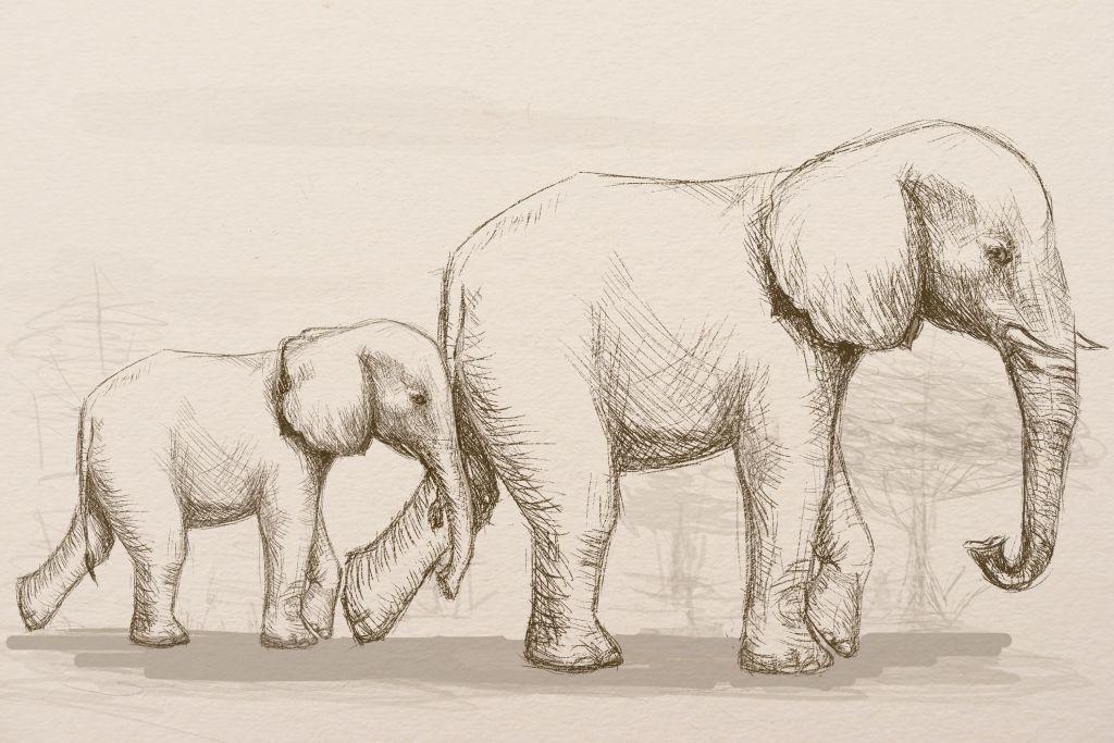 рисунок слона карандашом