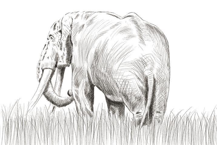 готовые рисунки слона карандашом, фото идеи 4