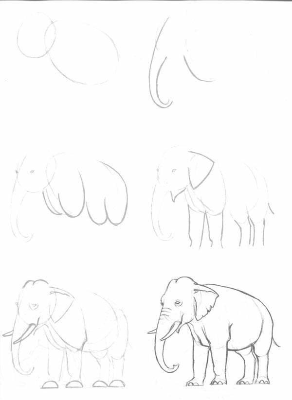 рисунок слона поэтапно карандашом фото 1