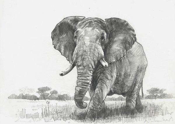 готовые рисунки слона карандашом, фото идеи 1