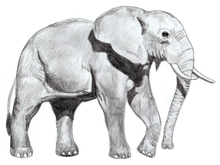 готовые рисунки слона карандашом, фото идеи 3