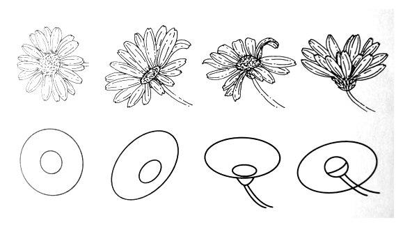 сложная ромашка - пошаговый рисунок карандашом фото 1