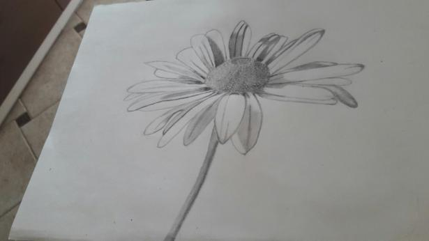 сложная ромашка - пошаговый рисунок карандашом фото 2