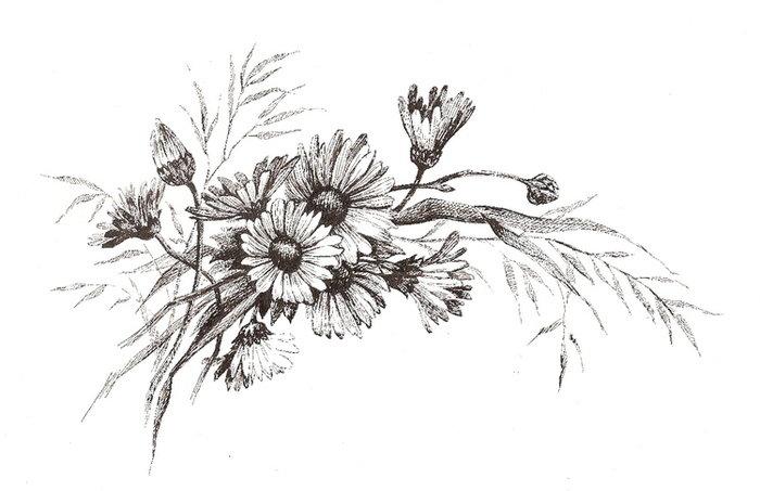 ромашка рисунок карандашом, готовые фото работы 2