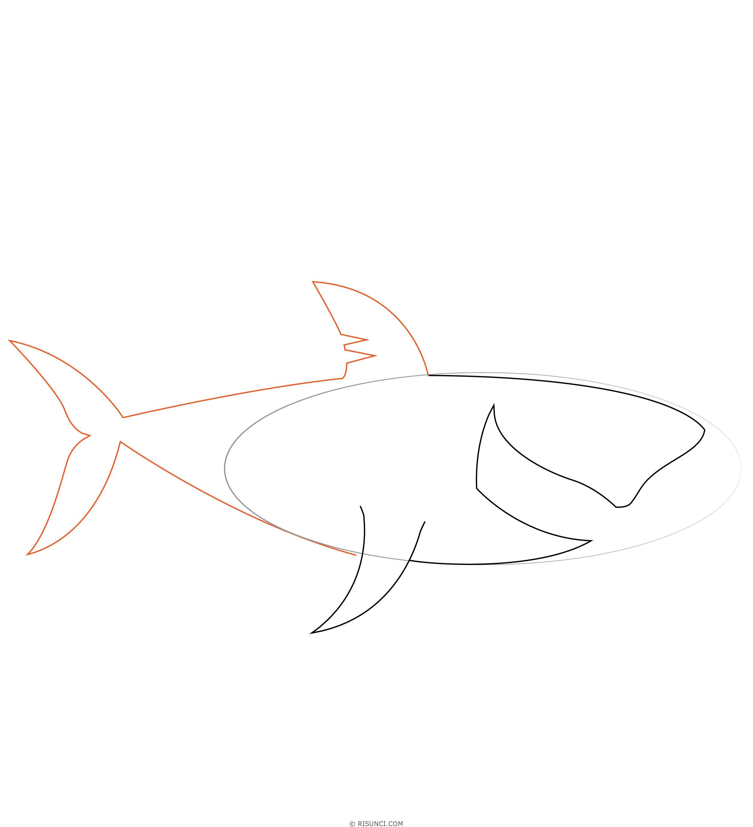 Картинки акулы чтобы нарисовать