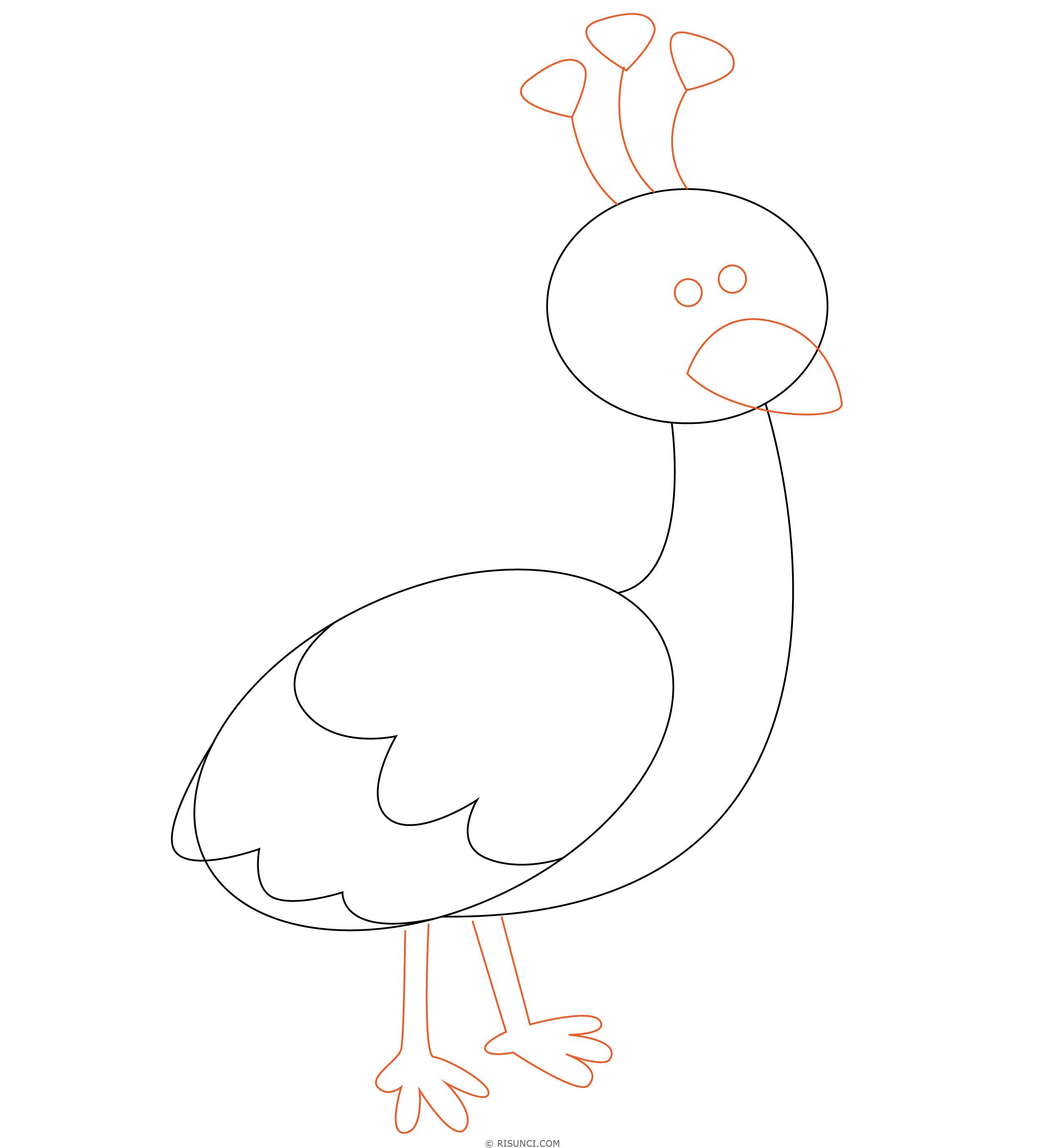 рисунок павлина без хвоста голубей есть