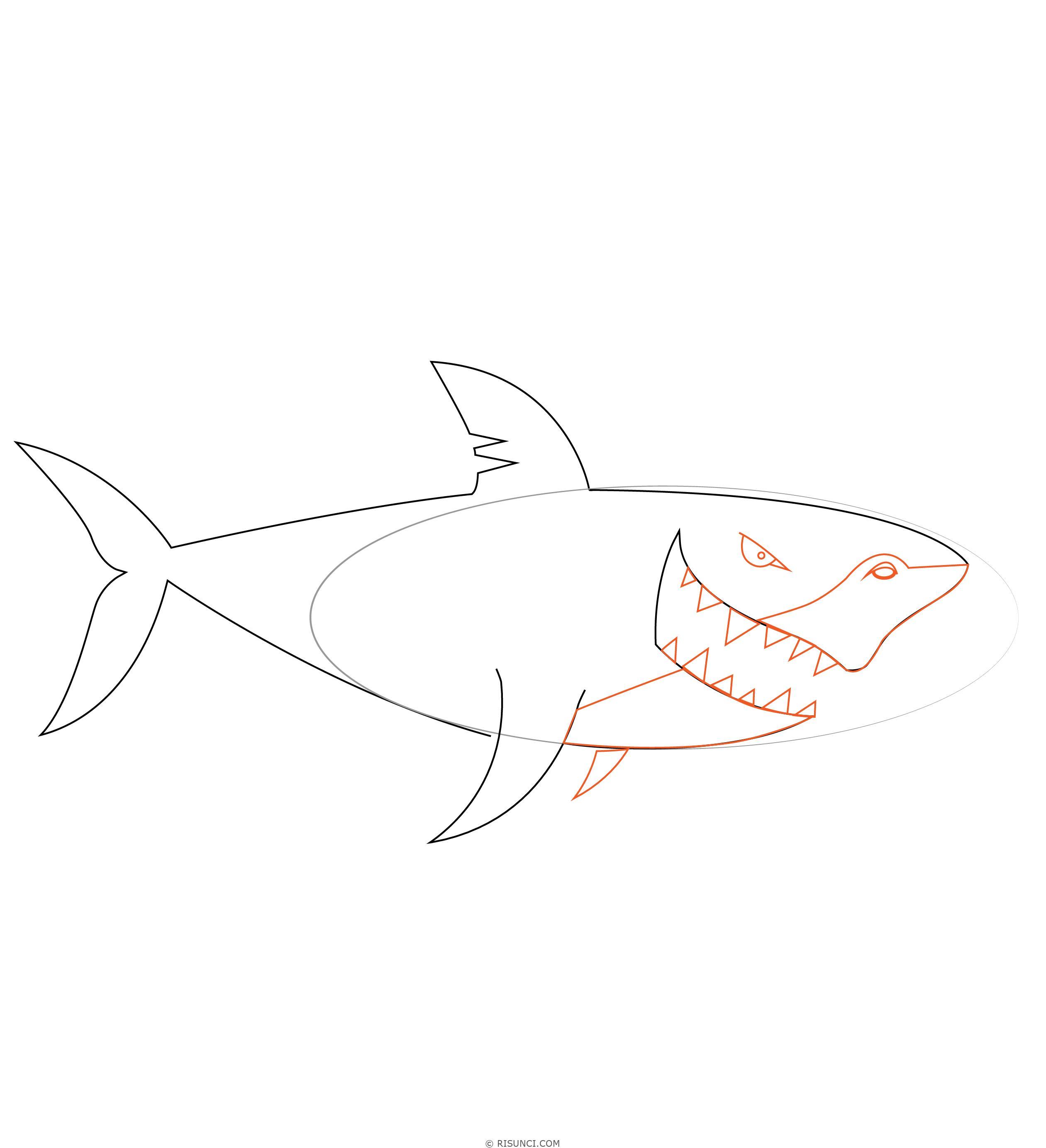 альбом картинки как нарисовать акулу карандашом поэтапно наука, которая изучает
