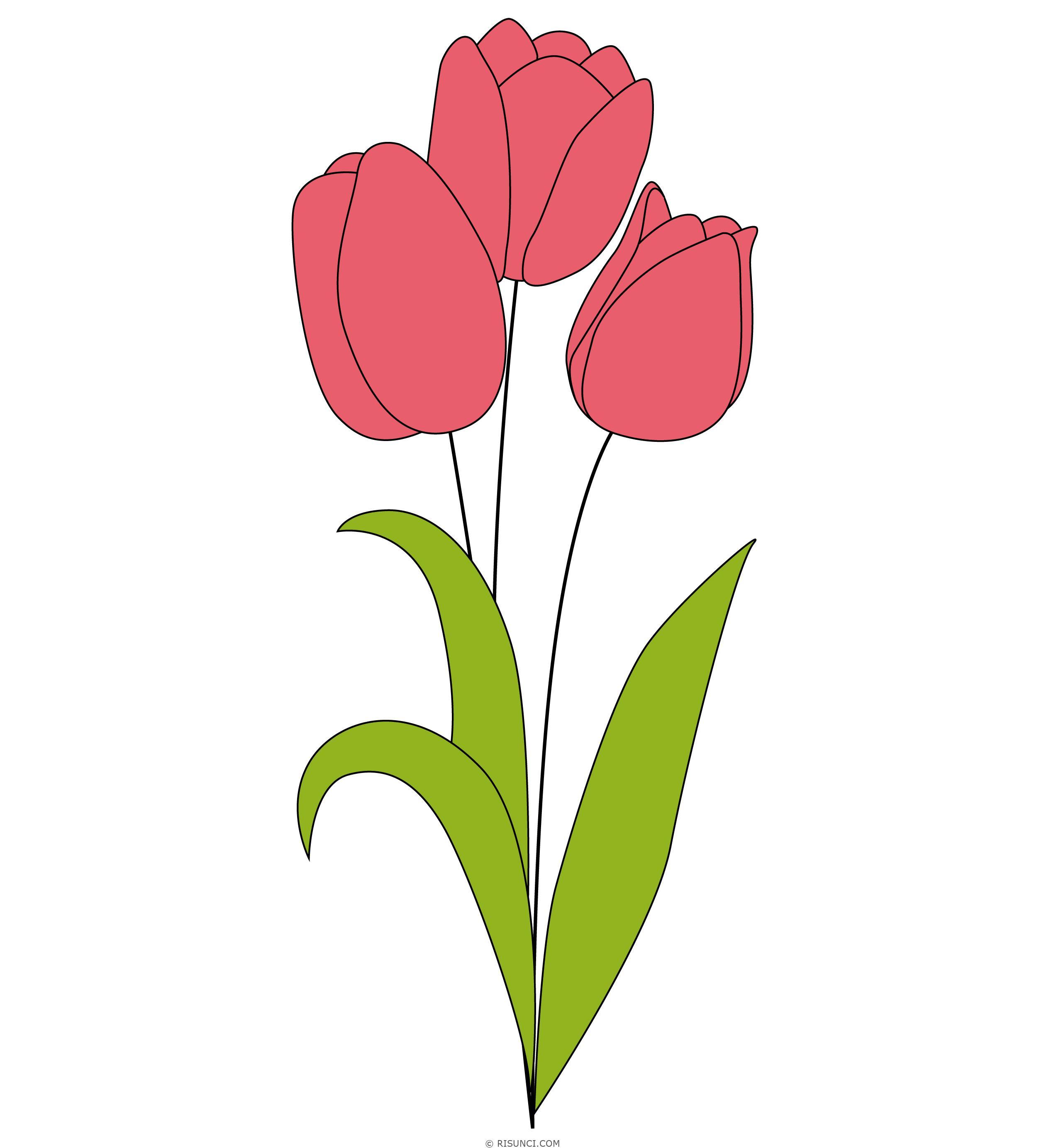 картинки тюльпан как нарисовать истории